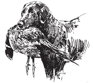 BirdHuntingReportIllustration-Dog