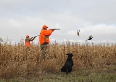 Hunting a field