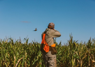 Shooting at a pheasant