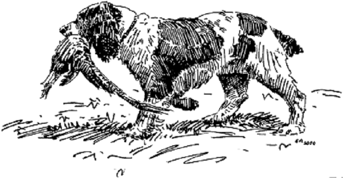 Illustration from The Bird Hunting Report by Gordon Allen